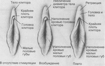 Лабиопластика и иссечение капюшона клитора